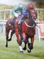 Darnathean winning at Brighton under Sean Levey.