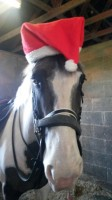 Yard hack RORY says 