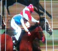 SPRING LOADED wins in a photo finish at Lingfield 20.02.16