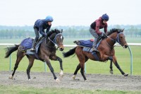 Two year olds POWER ON and MEDDLE 2018 on the gallops